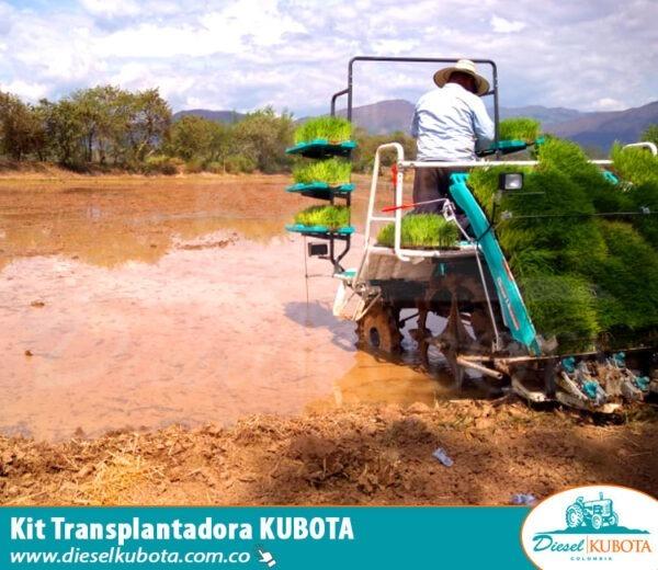 Trasplantadora de arroz colombia